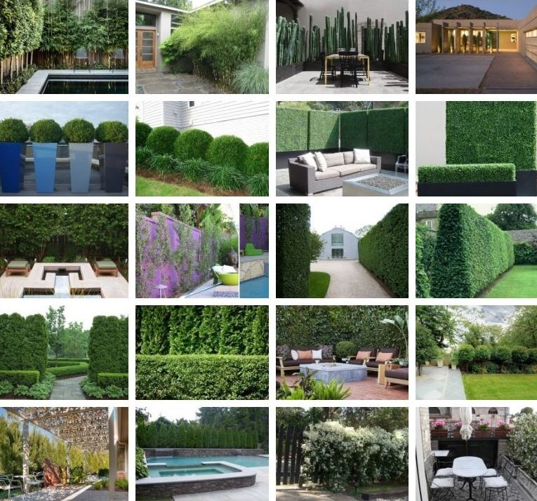 گیاه گلخانهای برای دیوار باغچهای