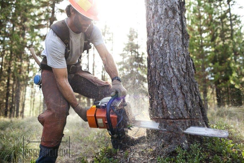 قطع کردن درخت در حیاط منزل : وقتی مجبور هستید!