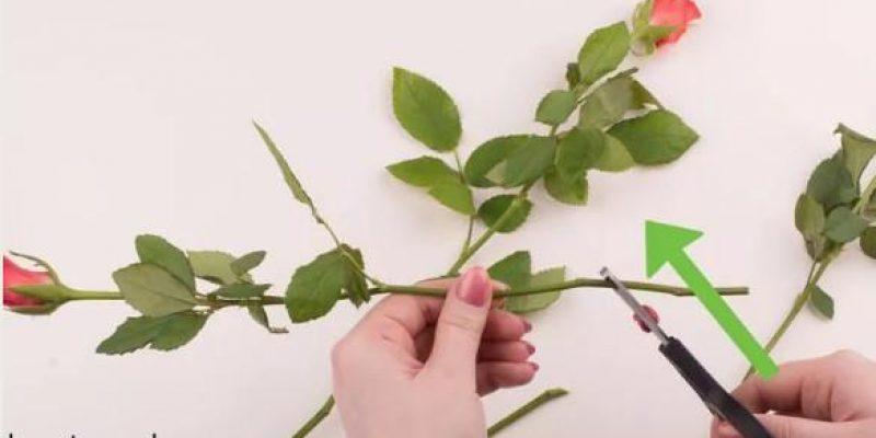 روش هایی برای دیرتر پژمرده شدن گل های طبیعی تازه چیده شده در دکوراسیون منزل