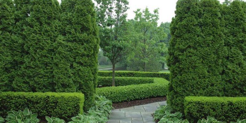 حریم خصوصی با گیاهان در معماری محوطه