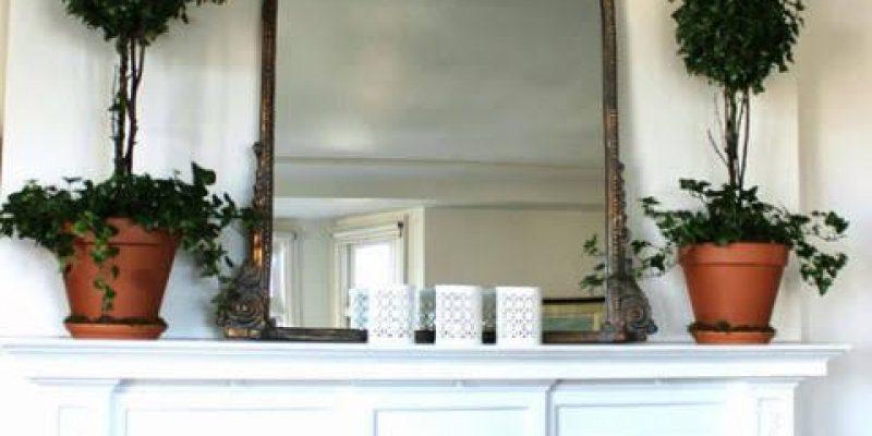 گیاهان آپارتمانی در دکوراسیون داخلی