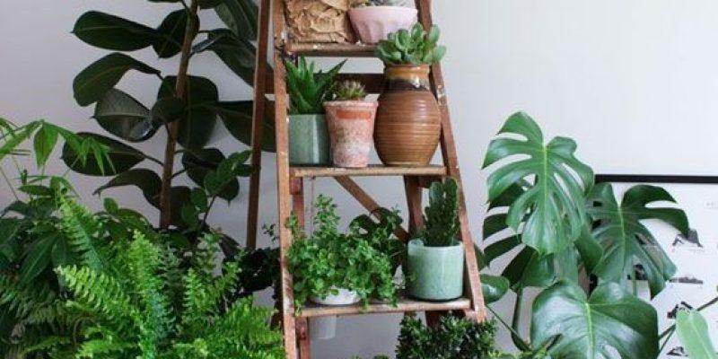 استفاده دکوراتیو از گیاهان در خانه با ایده های خاص