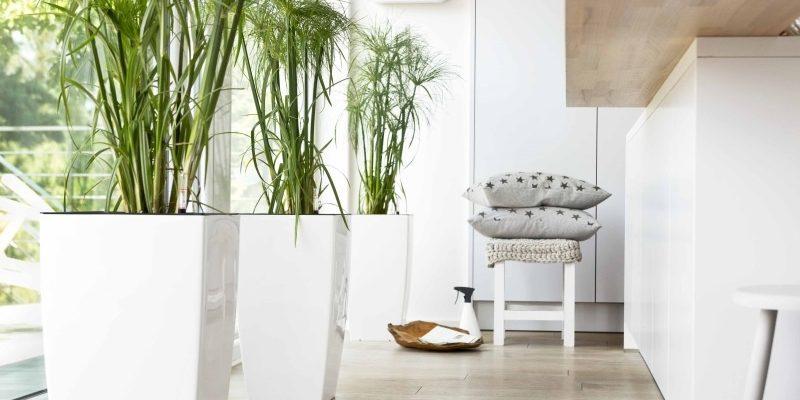 انواع گیاهان آپارتمانی : گیاهان مقاوم و زیبا مناسب منزل را بشناسید