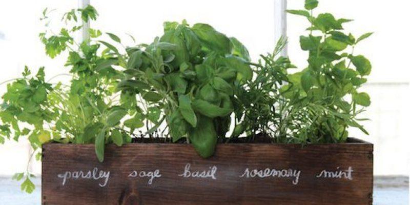 باغچه سبزیجات در بالکن خانه خود بسازید!