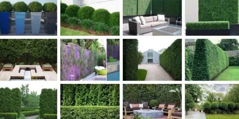 ده گیاه برای حفظ حریم و استایل بخشیدن به حیاط شما