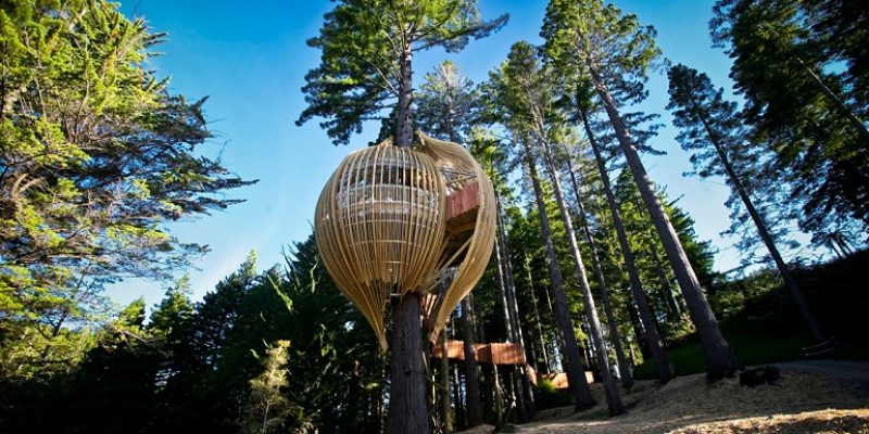 طراحی رستوران درختی/ گروه معماری Pacific Environments