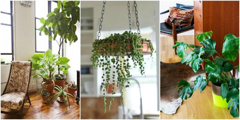 نگهداری گیاهان آپارتمانی در منزل و نکات مهم درمورد آنها