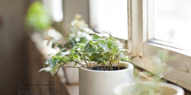 تاثیرات استفاده از گیاهان خانگی در دکوراسیون منزل