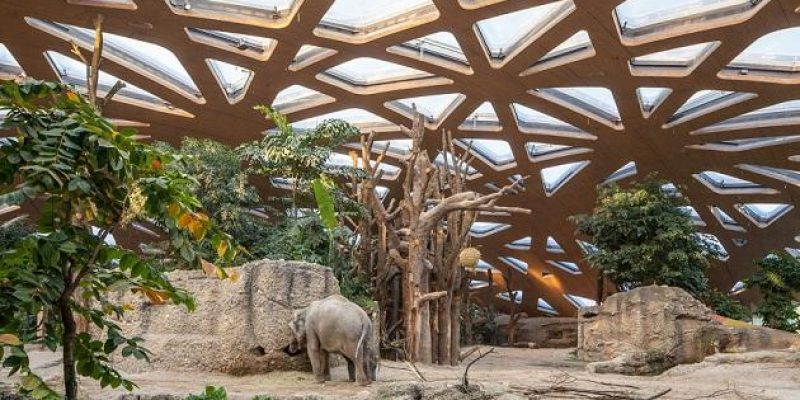 معماری و طراحی باغوحش زوریخ / گروه معماری Markus Schietsch