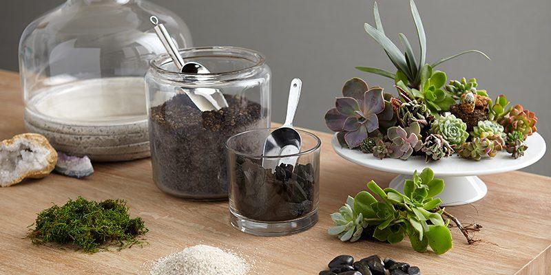 ساخت تراریوم یا باغ شیشه ای و نگهداری گیاهان خانگی