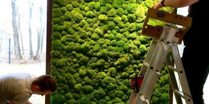 دیوار های سبز : راهنمایی جامع در مورد دیوارهای سبز یا باغ های عمودی