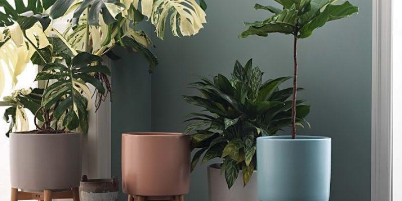 گلدان های مدرن که سر زندگی را به خانه شما می آورد