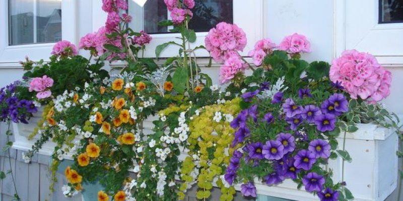 چطور یک باغچه ی زیر پنجره ای پرورش دهیم