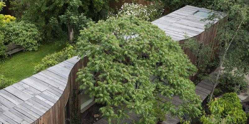 خانه درختی/ گروه معماری ۶a