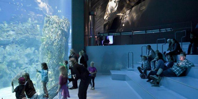 طراحی آکواریوم سیاره آبی در دانمارک / گروه معماری ۳XN
