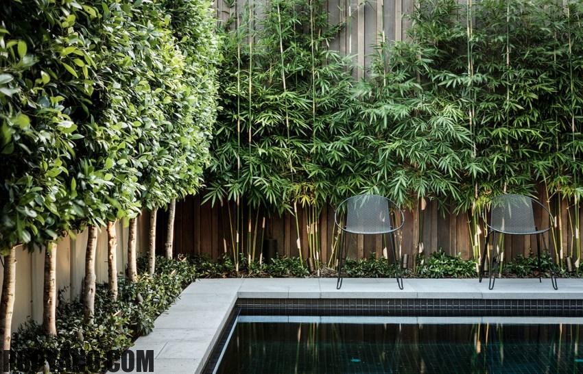 گیاهانی که برایتان حریم خصوصی