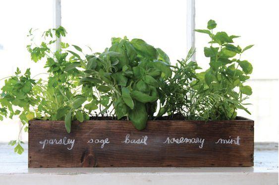باغچه سبزیجات