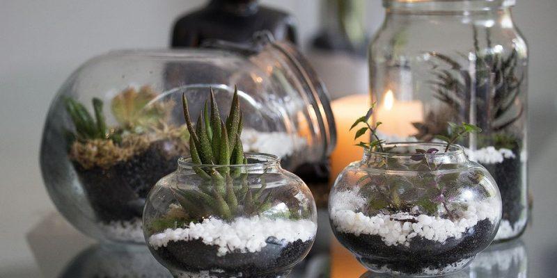 تراریوم یا باغ مینیاتوری خود را بسازید.