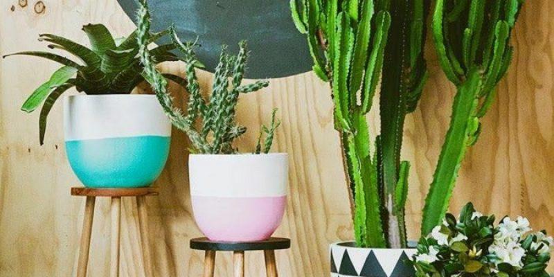 چیدمان گل و گیاه در منزل : فضای سبزتان را متفاوت طراحی کنید