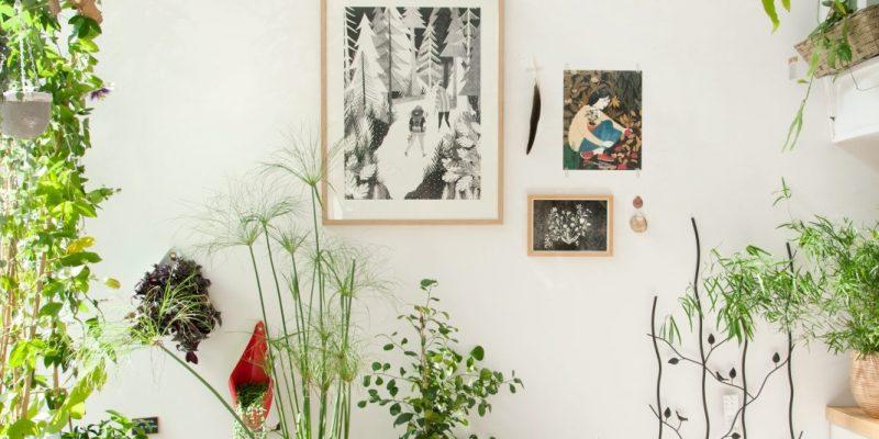 گیاهان آپارتمانی مقاوم و زیبا در دکوراسیون منزل: سبز زندگی کنید!