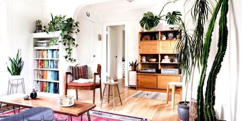 گیاهان آپارتمانی : این دوست داشتنی ها را به منزل تان بیاورید!
