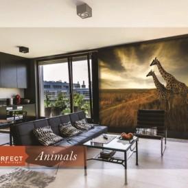 پوستر دیواری حیوانی پرفکت PERFECT ANIMALS