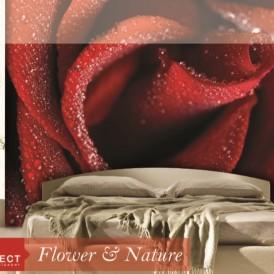 پوستر دیواری فلاور اند نیچر PERFECT FLOWER AND NATURE